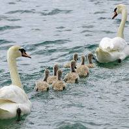 Spécialisation en accompagnement des familles en fonction de vos intérêts